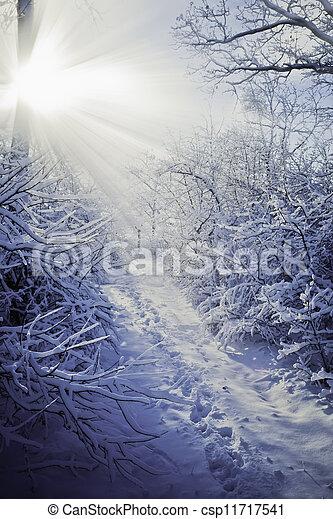Winter forest - csp11717541