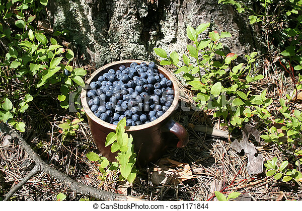 Antioxidant berry in green forest - csp1171844