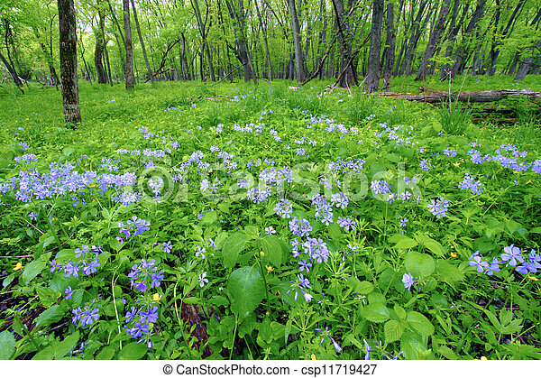 Spring Forest Scenery Illinois - csp11719427