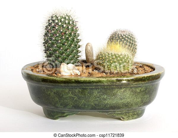 photos de cactus pot trois vert floristic composition. Black Bedroom Furniture Sets. Home Design Ideas