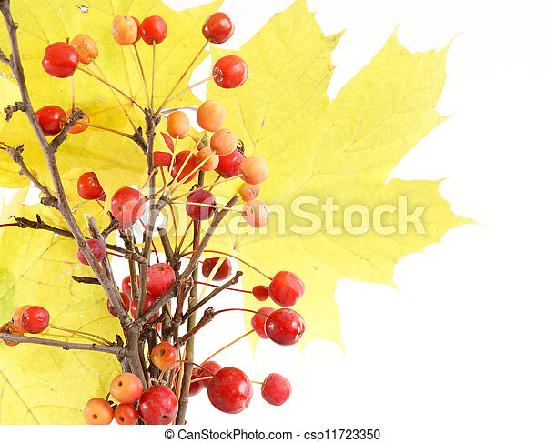 Autumn bouquet of branches with small apples and maple leaves to color a glass vase on a white background