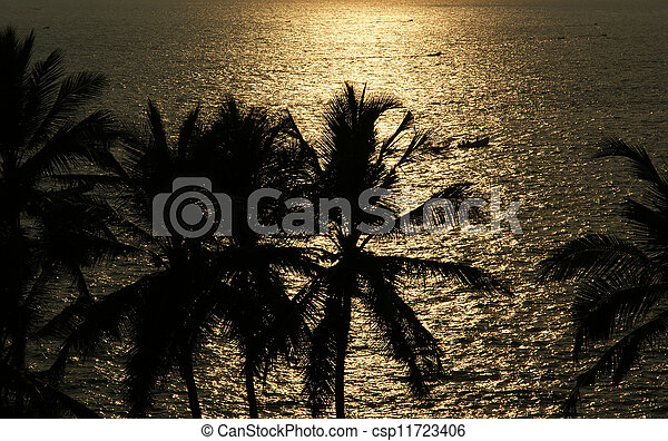The contours of the coconut palms at sunset and ocean, Kerala, South India - csp11723406