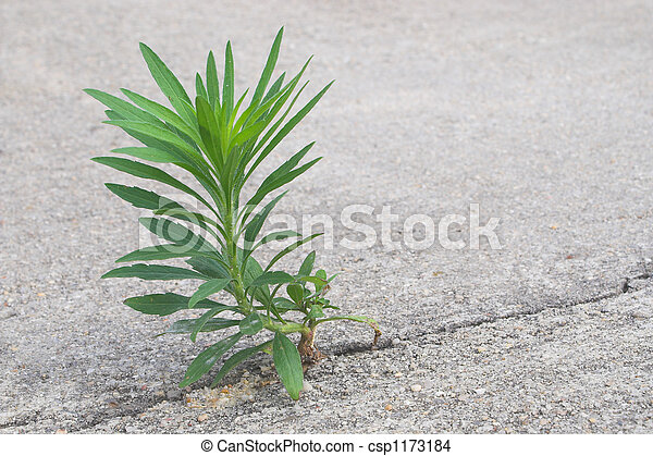 An Undesireable Weed  - csp1173184