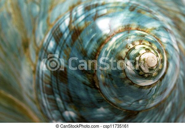 Blue Seashell - csp11735161