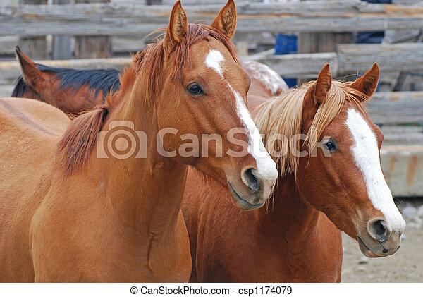 Chestnut Horses - csp1174079