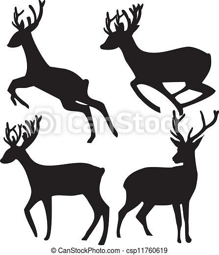 Whitetail Deer Vector