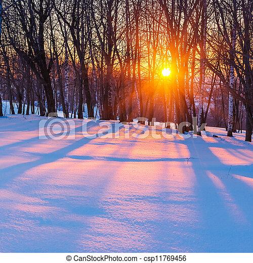 pôr do sol, floresta, Inverno - csp11769456