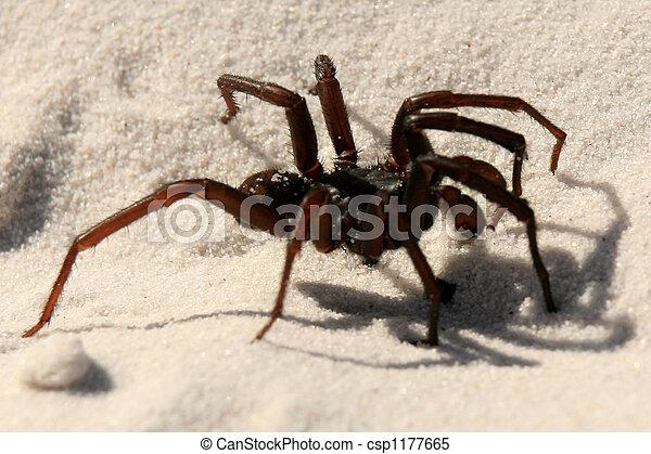 Spiders Fraser Island