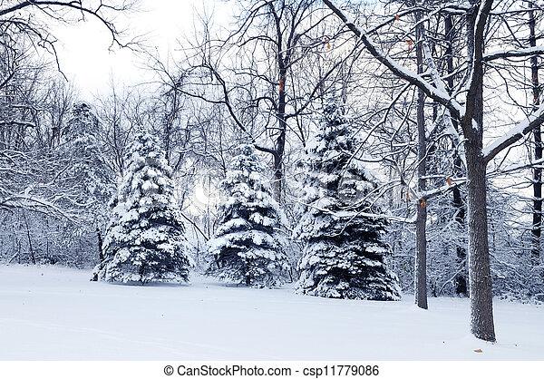 Winter Wonderland - csp11779086