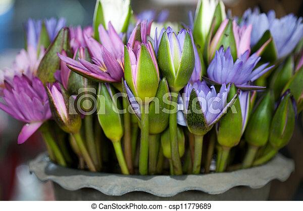 Group of lotus - csp11779689