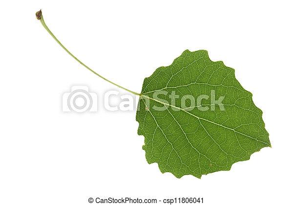 aspen leaf - csp11806041