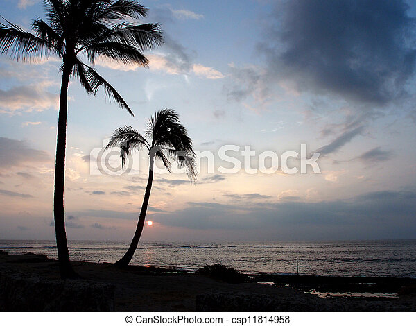 Tall Coconut tree with the sunset off the water of Makaha - csp11814958