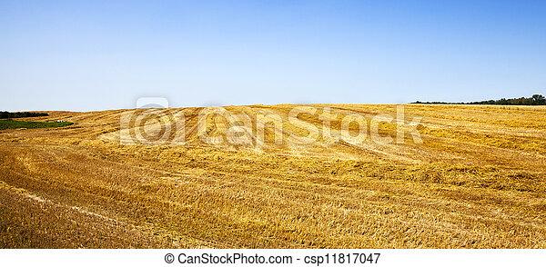 agriculture   - csp11817047