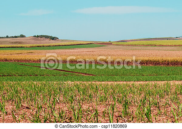 Sugarcane fields for Australian agriculture under cultivation - csp11820869