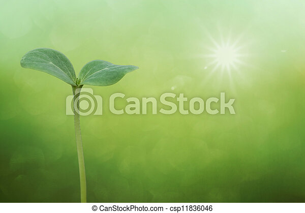 Tree seedling on spring background - csp11836046