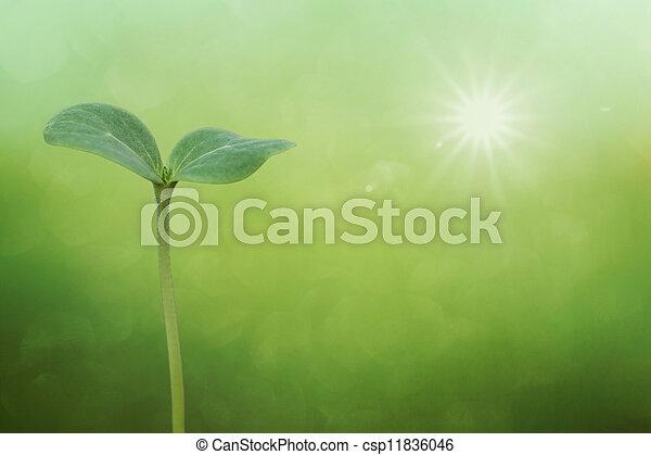 Tree seedling on spring background - csp11836046