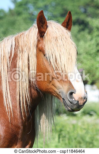 Beautiful palomino draught horse portrait