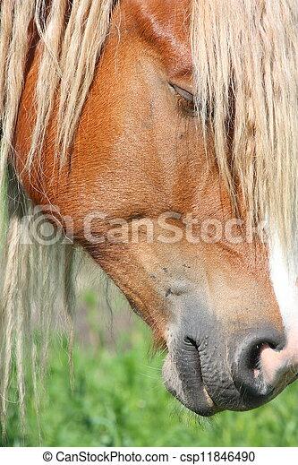 Palomino horse head close up