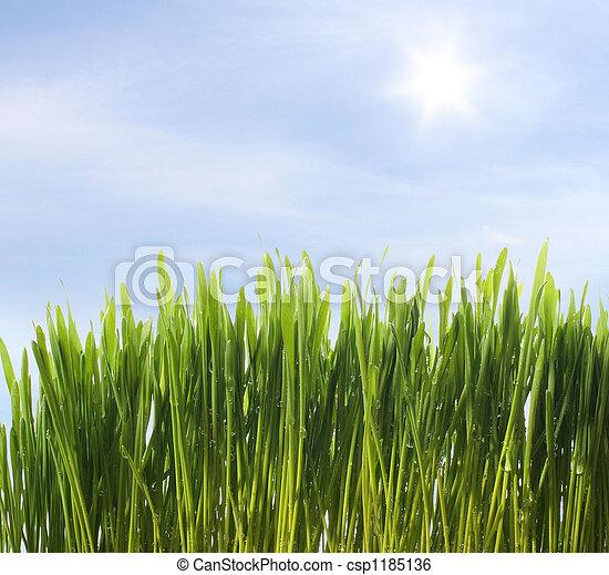 green fresh grass - csp1185136