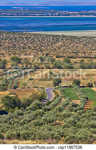 Olive trees grove and Vrana lake - csp11867536