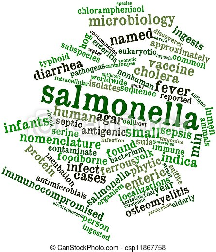 Image result for salmonella graphic