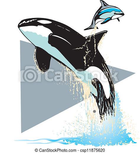 Killer whale Vector Clipart EPS Images. 558 Killer whale clip art ...