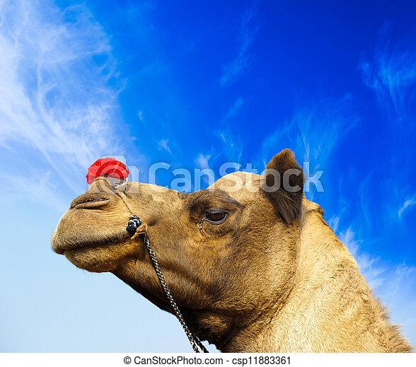 Camel animal adventure background - csp11883361