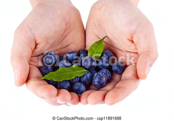 a handful of blueberries - csp11891688