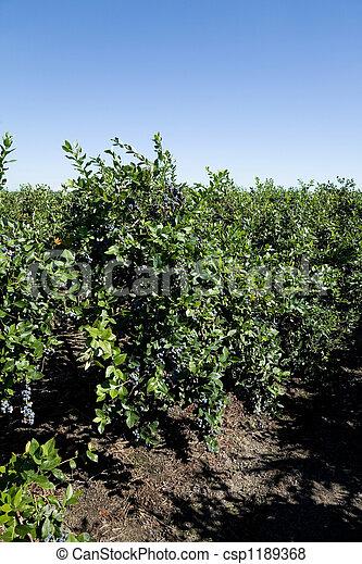 árvore, Mirtilo - csp1189368