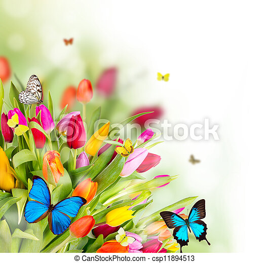 Beautiful spring flowers with butterflies - csp11894513