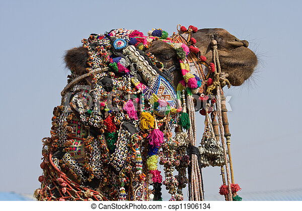 Camel at the Pushkar Fair ( Pushkar Camel Mela ) Rajasthan, India - csp11906134