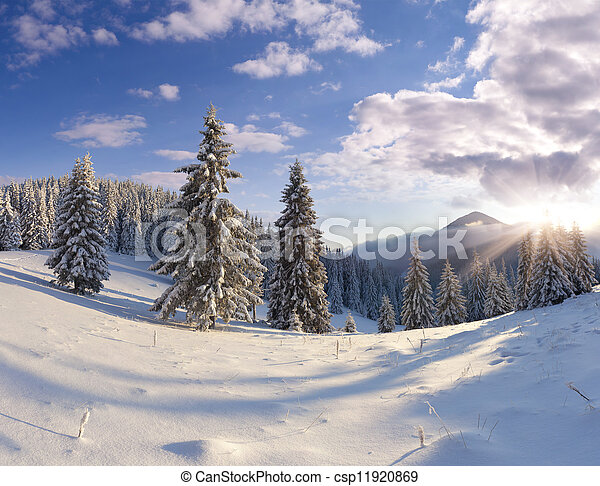 Beautiful winter landscape with snow covered trees.