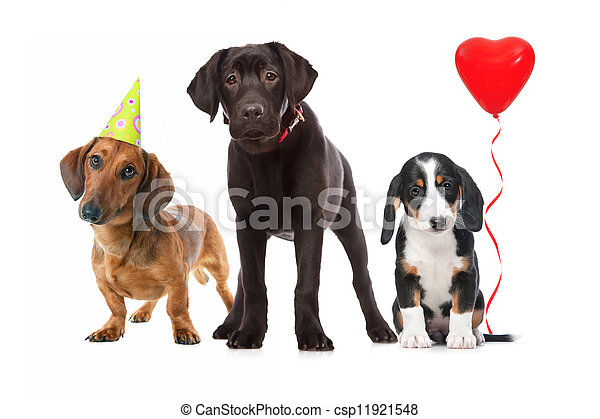 three puppies celebrating a birthday - csp11921548