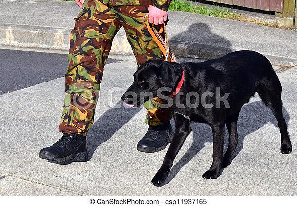 Military Dog - csp11937165