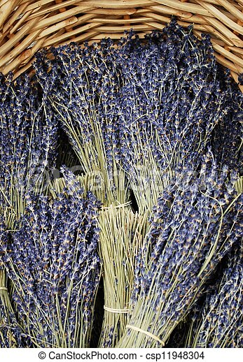 Dried lavender bunches - csp11948304