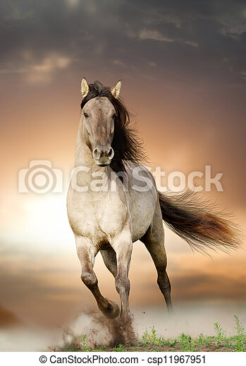 wild stallion running in sunset - csp11967951