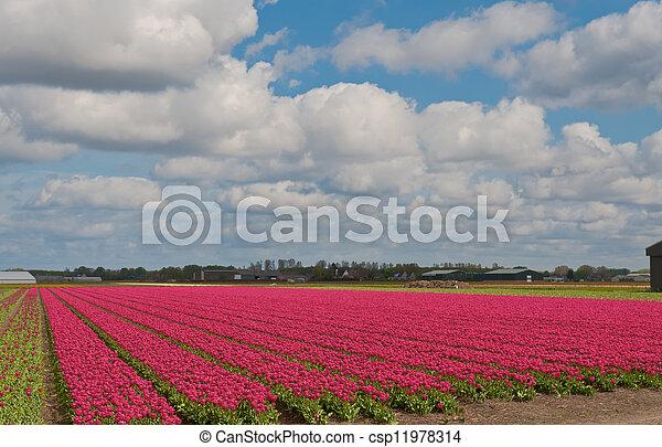 Dutch Agriculture - csp11978314