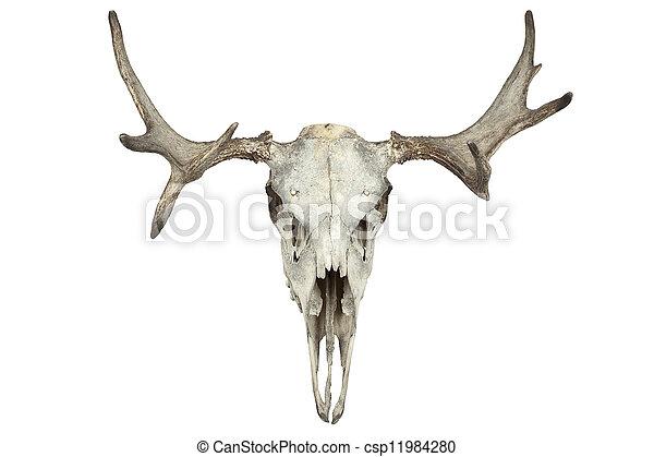 動物の 頭骨 - csp11984280
