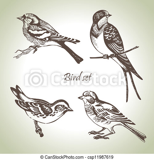 Bird set, hand-drawn illustration - csp11987619