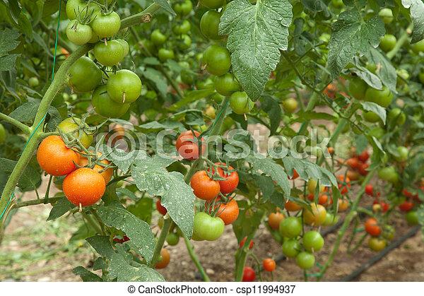organic agriculture - csp11994937