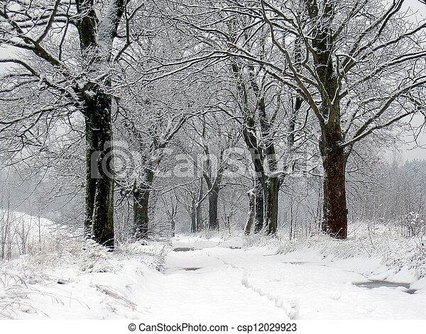 winter rural road - csp12029923