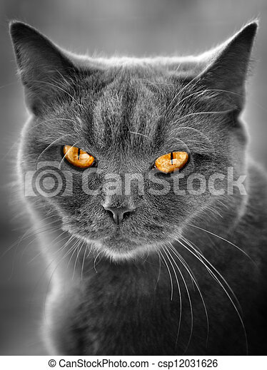 英國人, 貓 - csp12031626