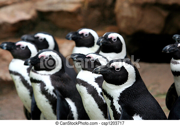 Funny penguins looking in same direction - csp1203717
