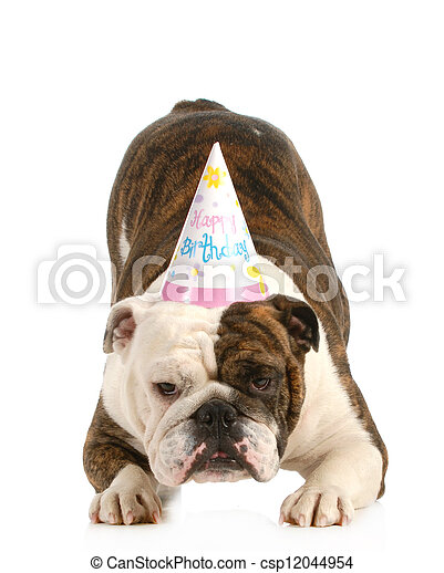 birthday dog - csp12044954