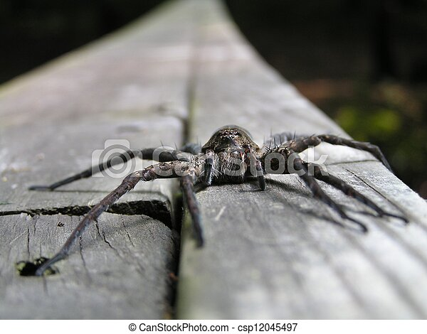 spider face - csp12045497