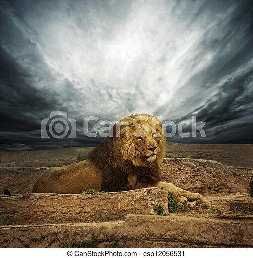 African lion in the desert - csp12056531