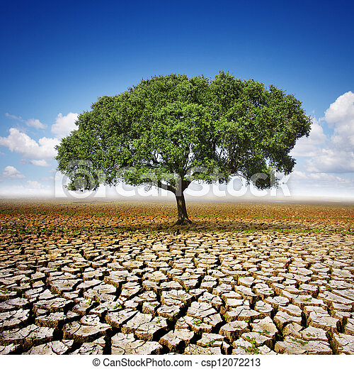 Tree On Dry Land - csp12072213
