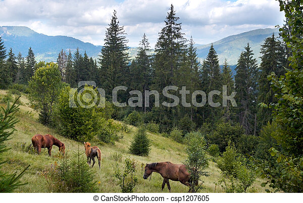 Horses on mountainside. - csp1207605