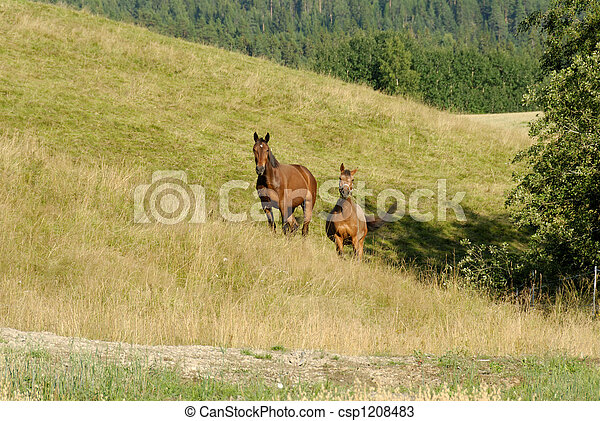 Grazing Horses  - csp1208483