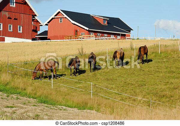 Horses by a Farm  - csp1208486